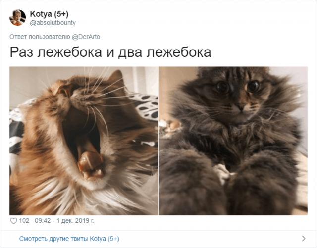 Пользователей Twitter попросили показать, чем занимаются их животные (25 фото)
