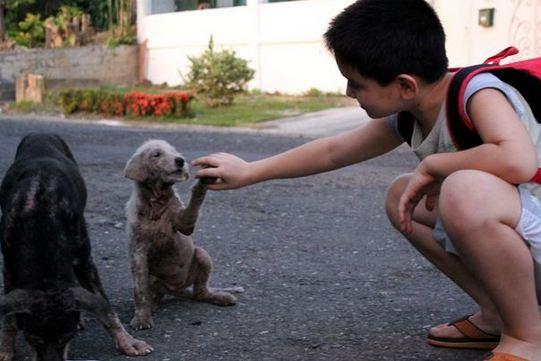 Обычный школьник тратил все свои карманные деньги на пропитание бездомных животных