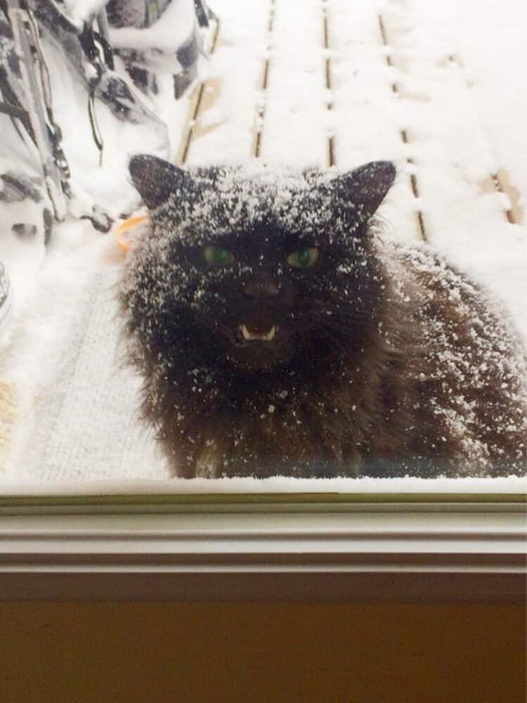 20 смешных фото наших любимых животных, которых забыли пустить домой