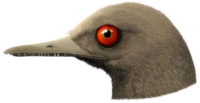 Мезозойский голубь: в Мьянме обнаружили следы самого маленького динозавра и сделали его 3D-модель