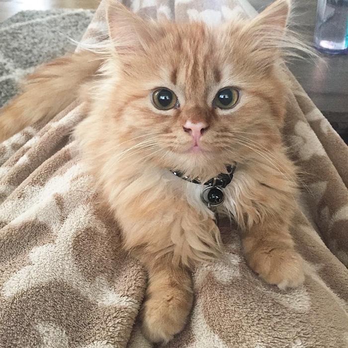 Эта милая кошечка Рэй теперь постоянно улыбается!