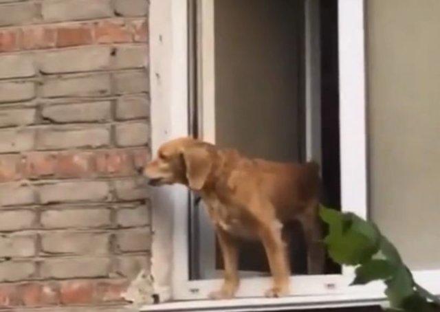 """Уговаривали пса не прыгать и предлагали пиво, когда появился хозяин и """"разрядил"""" обстановку (фото)"""