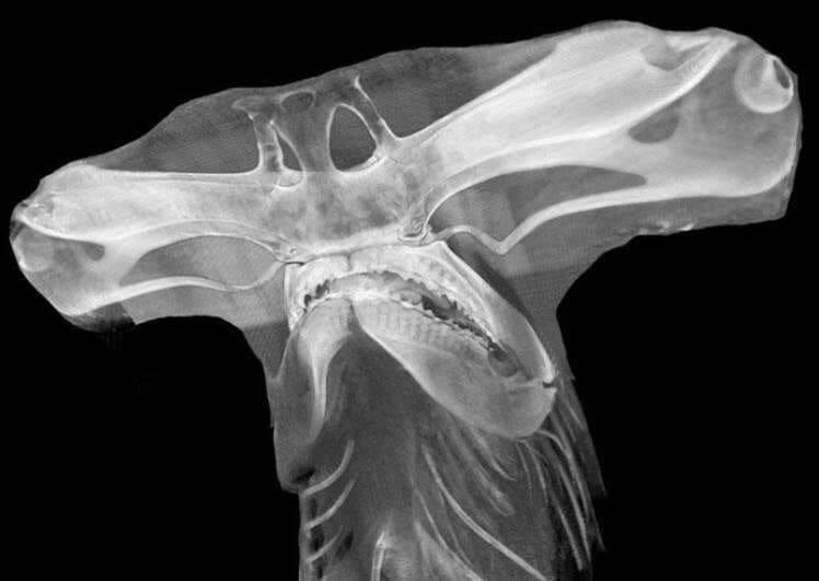 19 снимков в рентгеновских лучах, которые как по волшебству раскрывают скрытое и интересное