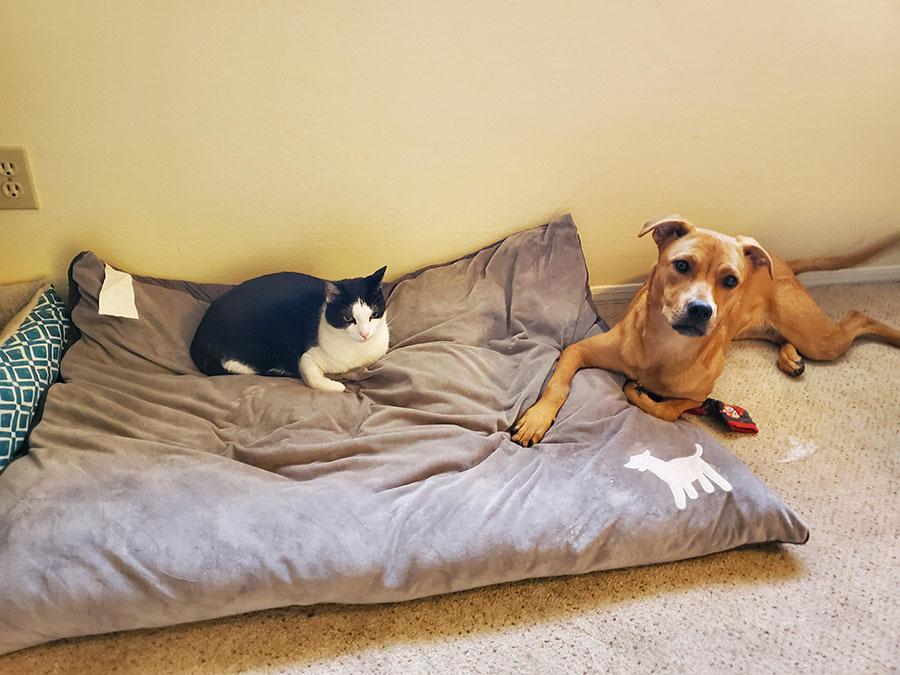 20 доказательств, что нет для собаки страшнее зверя, чем наглая домашняя кошка!