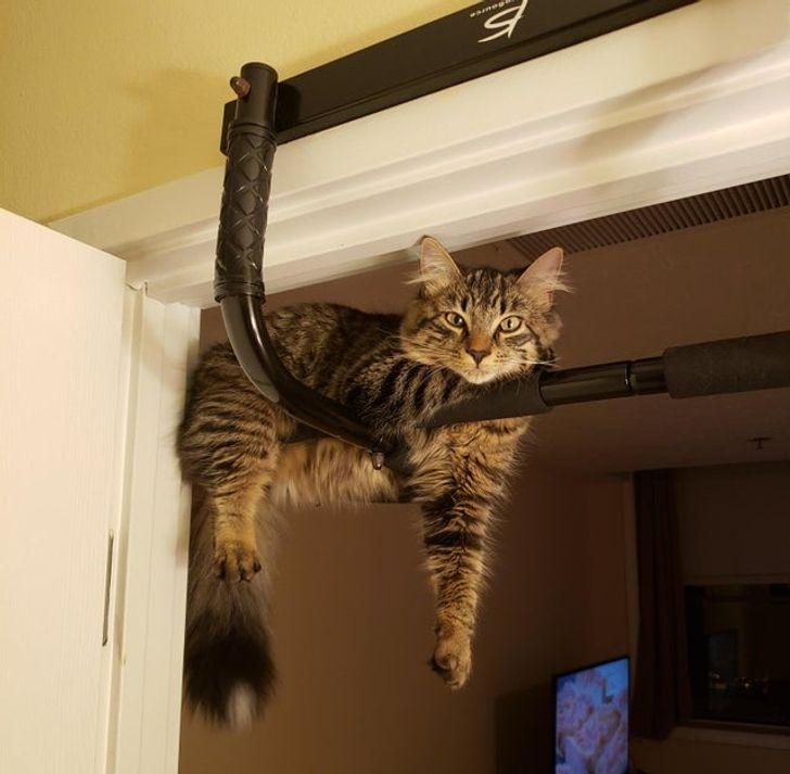 20 фактов в подтверждение того, что кошки всегда гуляют, где хотят, и никто им не указ