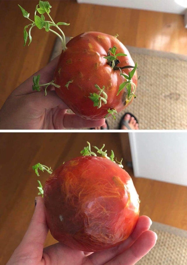 20 примеров, как на самом деле прорастают спелые плоды. Жутко и любопытно!