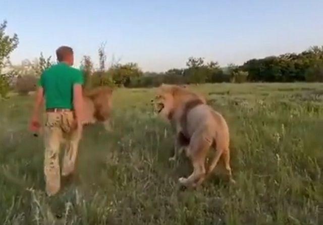 Как нужно воспитывать капризных львов