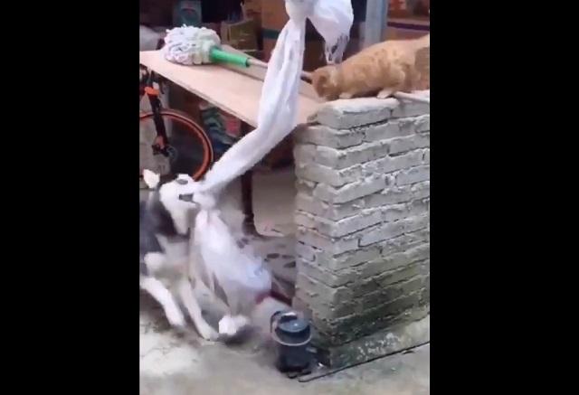 """Кот """"доигрался"""" и попал в ловушку обстоятельств"""