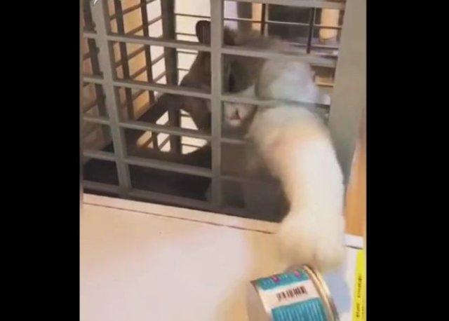 Настырный кот, которому очень нужна еда