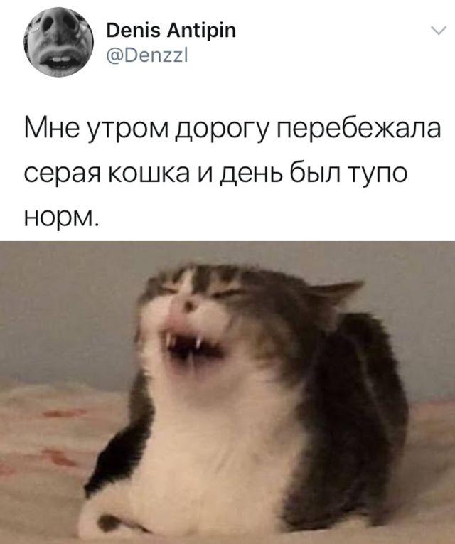 Серая кошка перебежала дорогу