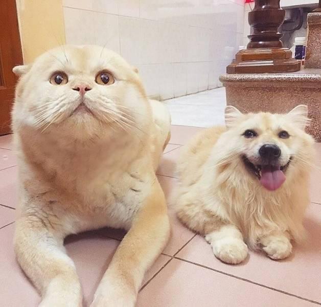 Замена лица на собаке и коте