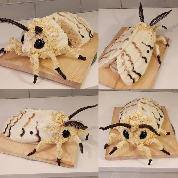 Торт в виде мотылька