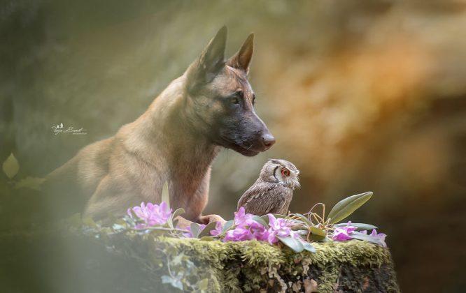 Удивительный животный мир: больше 30 фотографий пса и его верной подруги совы
