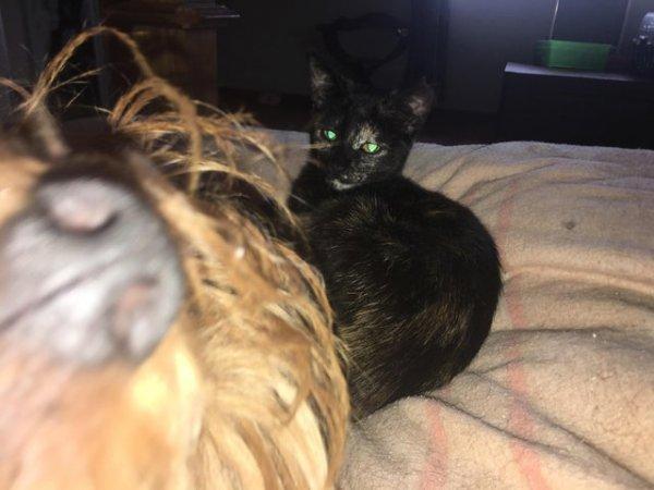 Выражение морды кота - лучшее описание фото