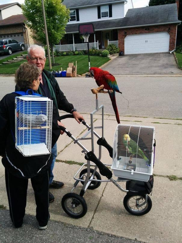 16 соседей, которые умеют сделать жизнь не скучной