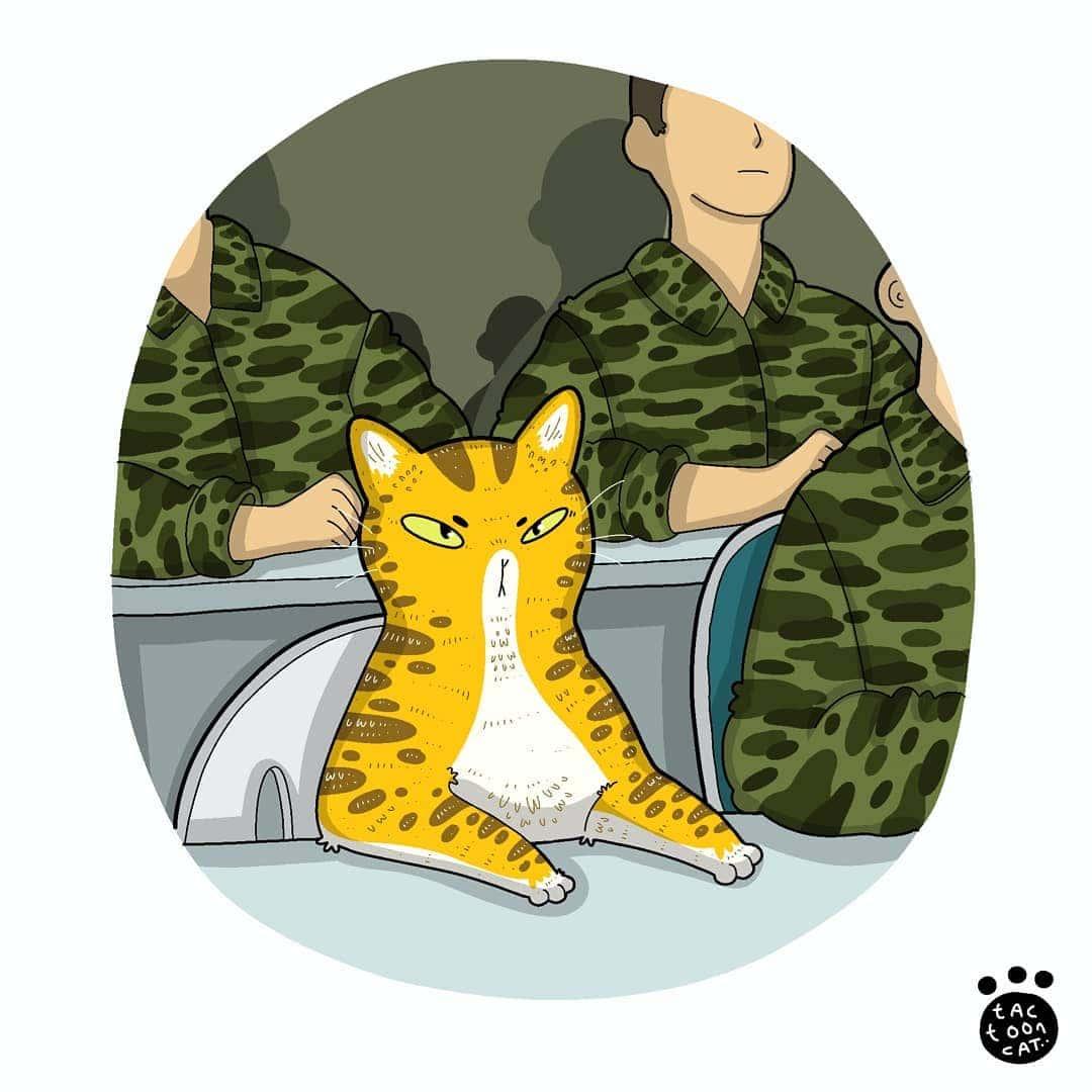 18 примеров, как можно перерисовать известный мем с котом и сделать его еще лучше