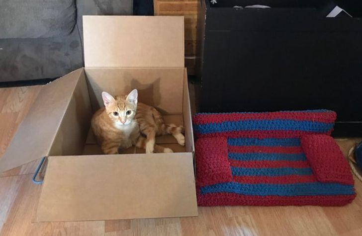 20 находчивых котиков, которые прекрасно устроятся и без лежанки, и даже без коробки