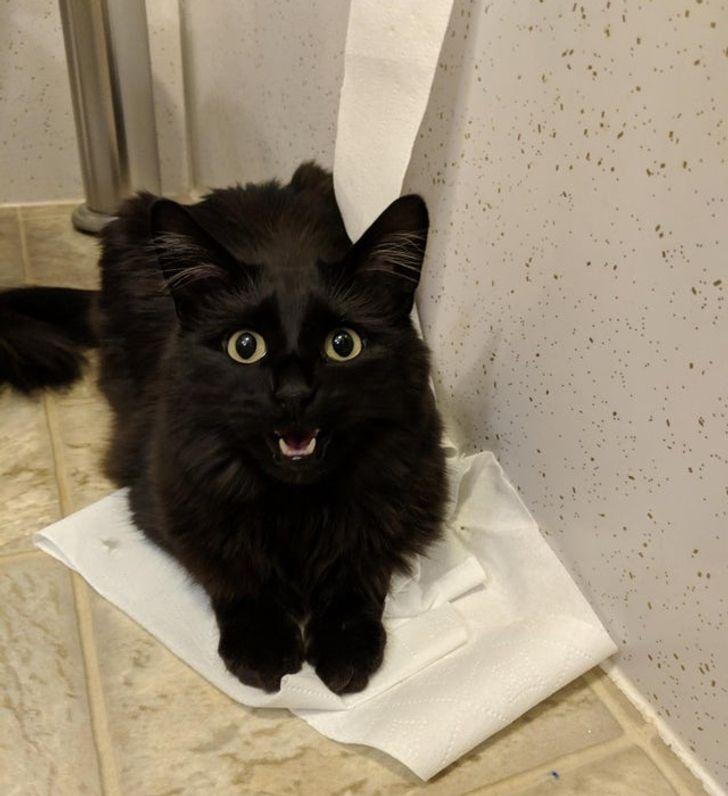 20 «зависших» котиков, которым категорически нужна перезагрузка и профилактика всей системы