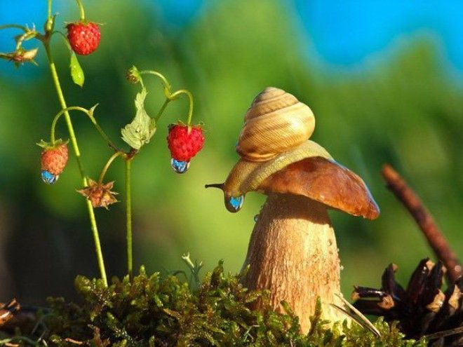 Феноменальные макро-фото признанного художника Вячеслава Мищенко