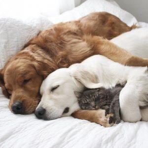 Как одно целое живут вместе две собаки и кот