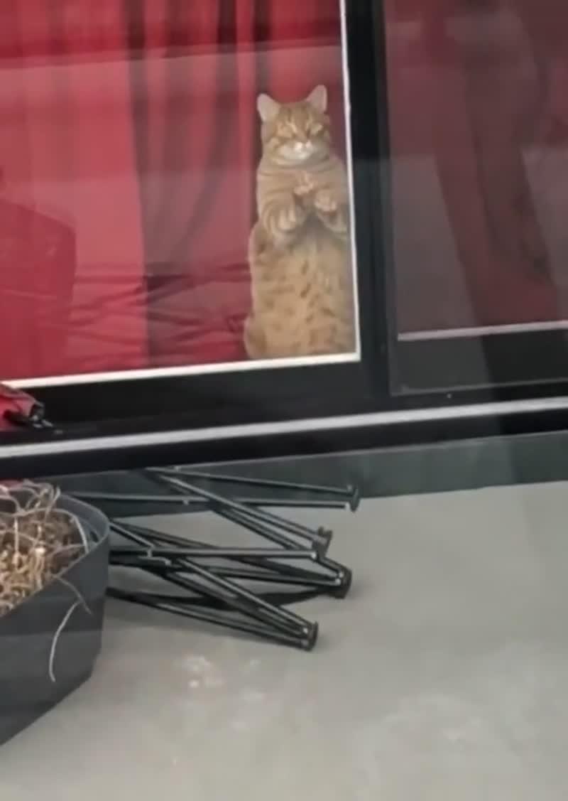 Коты, которые хотят быть вместе