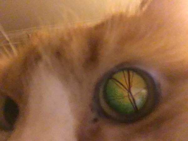 Что находится внутри кошачьего глаза