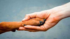 За брошенное животное, в Италии дают год тюрьмы