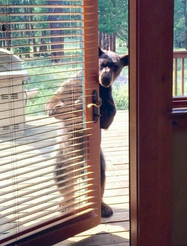 Медведь пришел в гости