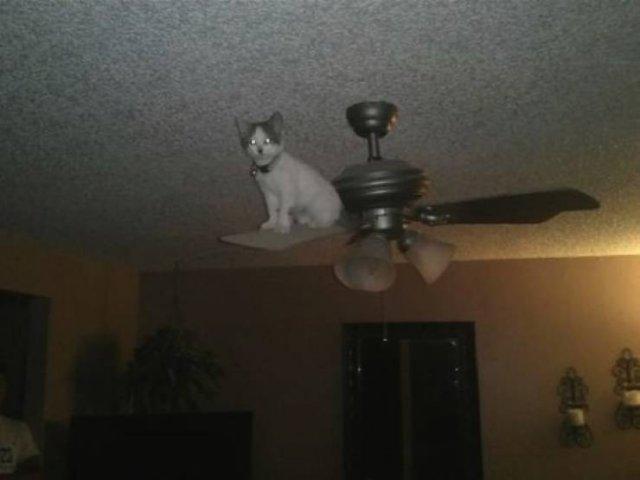 Кот на люстре