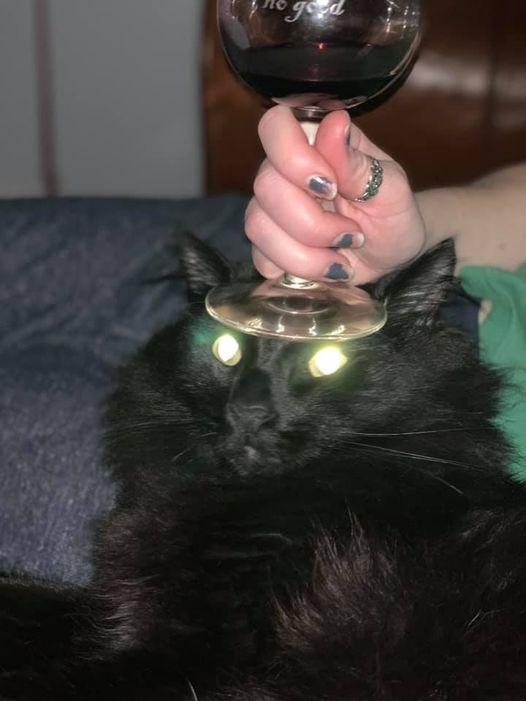 Смешные коты, которые совсем не умеют позировать для фото