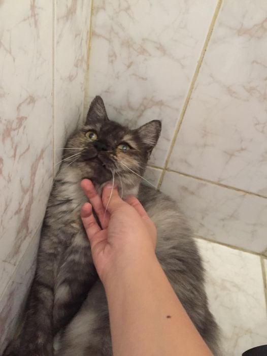 10 котиков не умеют позировать для фото – и потому невероятно смешные