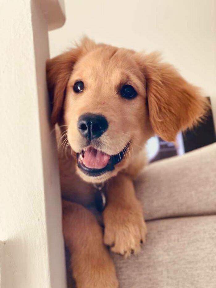 Хозяева показали своих собак улыбающимися! Самый позитивный челлендж в мире