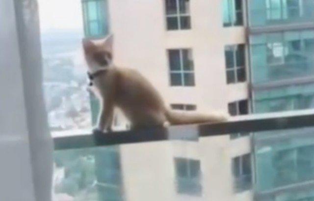 Кот, который чуть не поплатился за то, что гуляет сам по себе