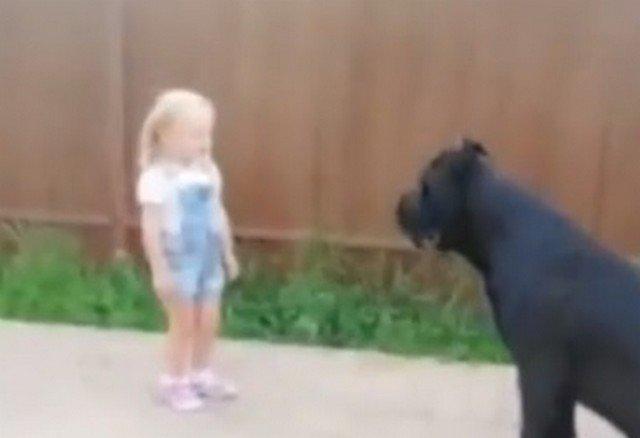 Собака могла сожрать девочку, но подчинилась ей