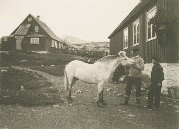 Единственная лошадь в городе Нуук. 1906 г.