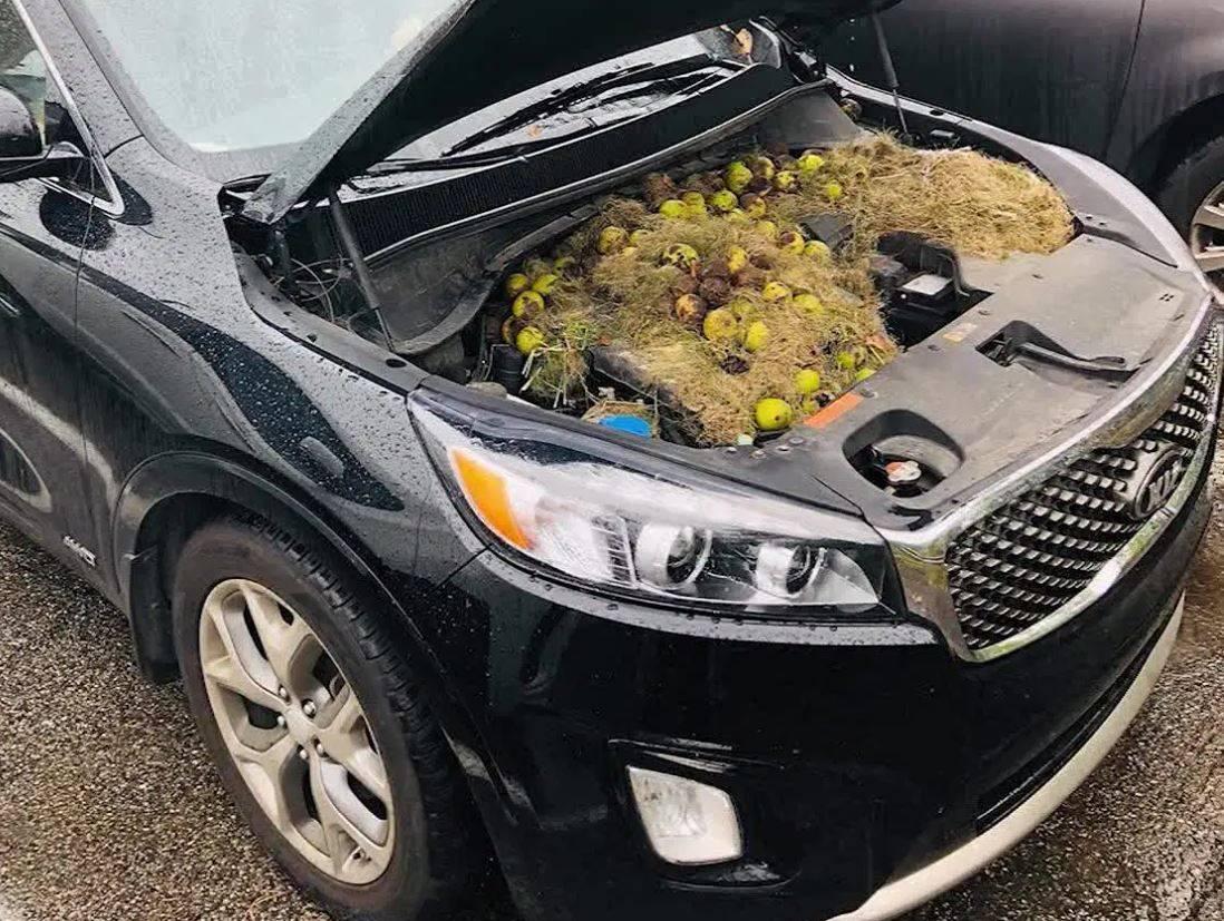 16 загадочных вещей, которые водители нашли под капотом своих машин