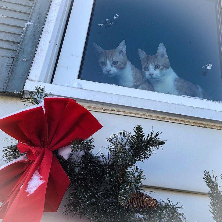 17 кошек, которые самозабвенно опровергают утверждение, что они не преданные людям