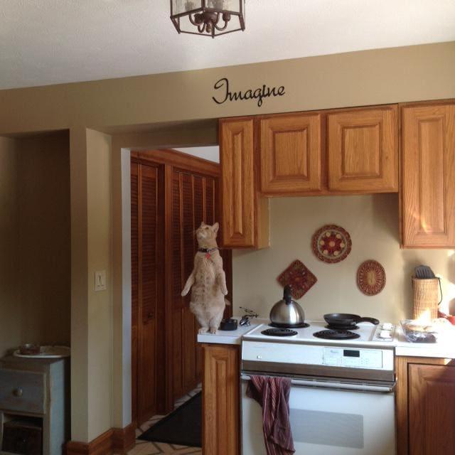 20 примеров, когда кошки одним неловким движением раскрыли свою демоническую сущность