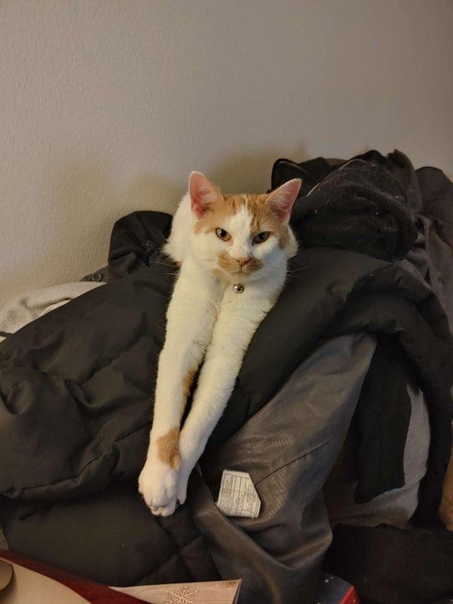 20 случаев, когда люди без боя уступили личное пространство кошкам