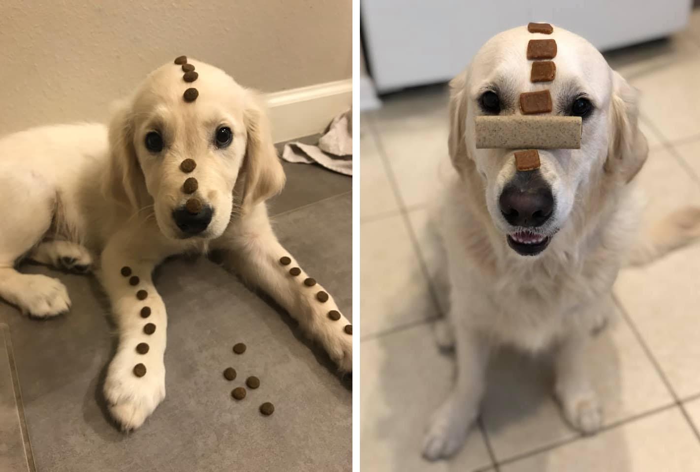 Люди решили показать, какие перемены случились с их собаками, и это выросло в целый челлендж