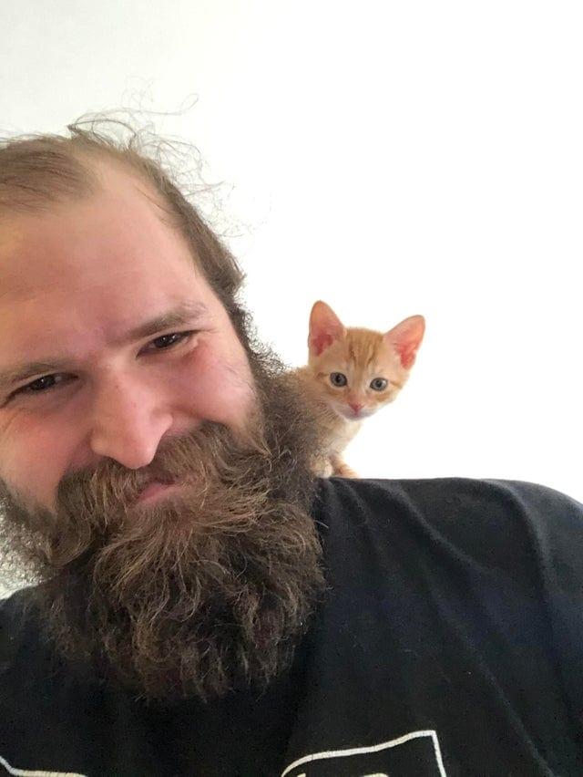 17 котяток, которые помещаются на ладошке и распространяют милоту на всех вокруг