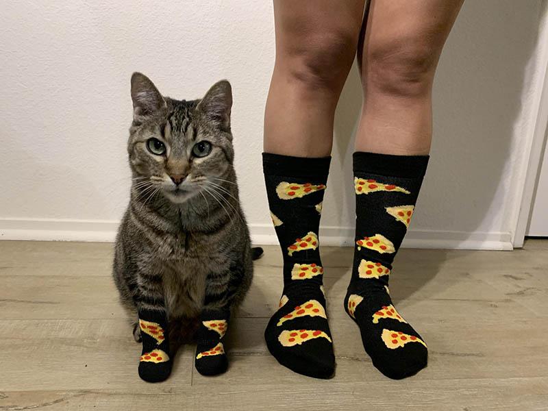 17 веских доказательств, что человечество только и делает, что поклоняется котикам