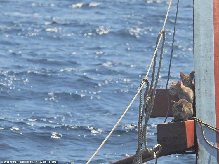 Боец отряда береговой охраны, в критический момент рискнул жизнью и спас четырех кошек с тонущего корабля