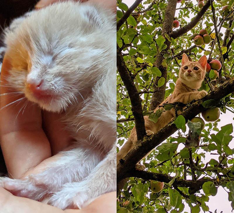 15 доказательств, что котята вырастают в один миг – и глазом моргнуть не успеешь!