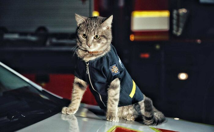 20 невероятно трудолюбивых котиков, которые опровергают мифы о лени этих животных