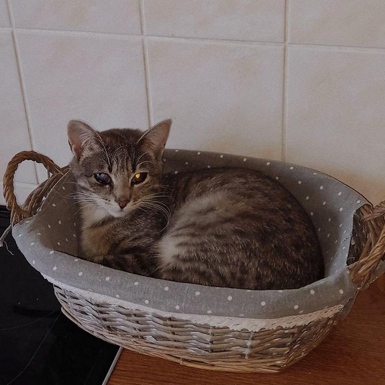 18 мастер-классов от котиков, как можно сладко выспаться в самых непредсказуемых местах