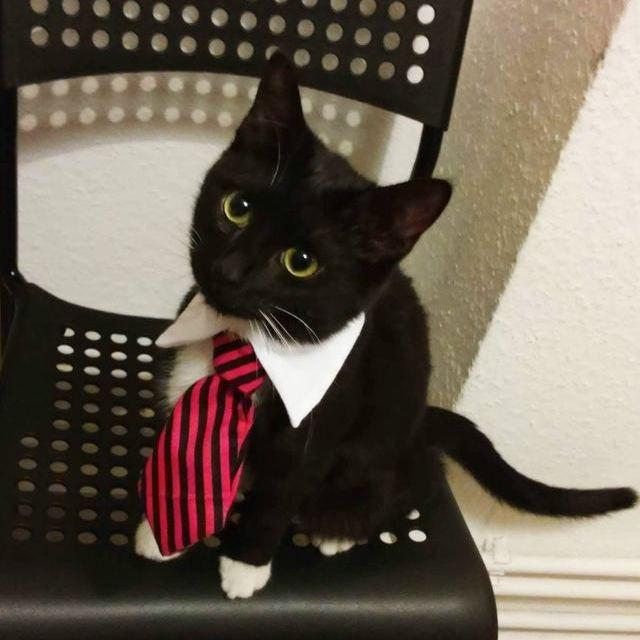 18 трудолюбивых котиков, которые готовы честным трудом отработать свою миску корма