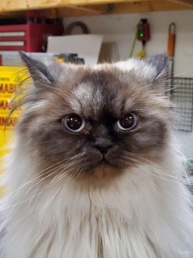 19 котиков, которые не рады ничему в мире, и демонстрируют это всем своим видом