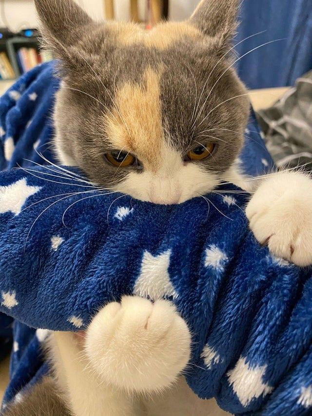 20 доказательств, что уважение кошек к своим хозяевам – глупый миф и не более того