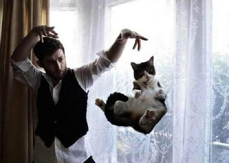 25 фото котов, сделанных в абсолютно правильный и подходящий момент